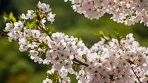 桜 周辺風景