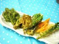 今が旬!の山菜天ぷら(一例)