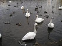 渡り鳥飛来沼