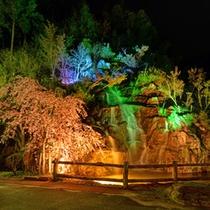 *【佐和屋の滝】ライトアップ 季節の花々、木々と共に滝の音とライトアップをお楽しみください。