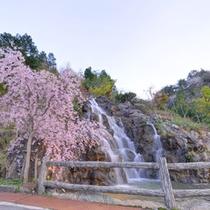 *【佐和屋の滝】滝の音を聞きながら季節の花々、木々の風情をお楽しみください。