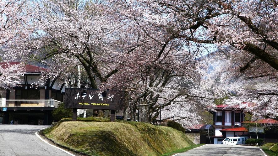 【ホテル外観】春の桜/例年、4月中旬から下旬にかけて敷地内にある180本の桜が開花