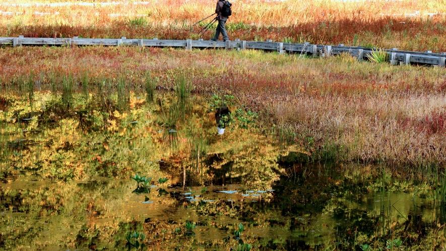 【周辺・景観】秋/たきがしら湿原/当館より車で40分
