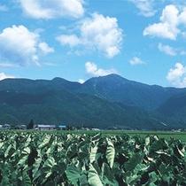 荒島岳(夏)