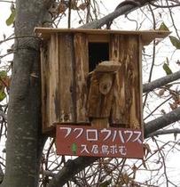 フクロウハウス