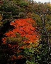 秋の蔵王5