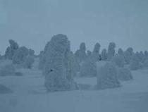 0701樹氷