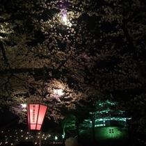 高田夜桜①
