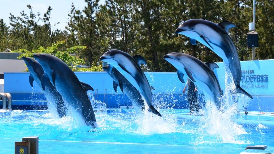 ●マリンピア日本海イルカショー