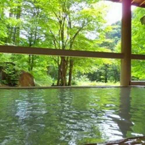 深緑の自然を目の前に、ホッと心休まるひととき