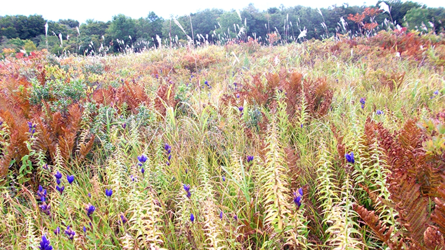 【桑ノ木台湿原】鳥海山を臨む湿原トレッキングを楽しめます。