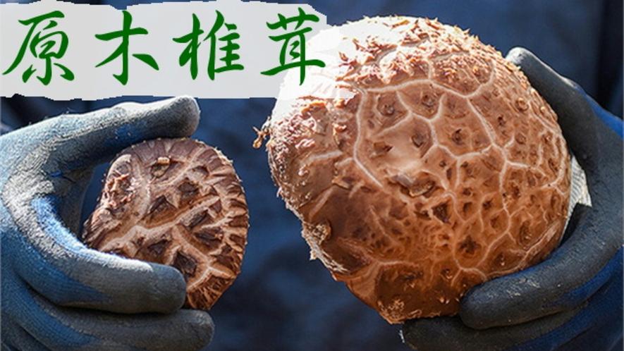味や歯ごたえ香りが別格!岩城町農園の原木栽培にこだわった椎茸