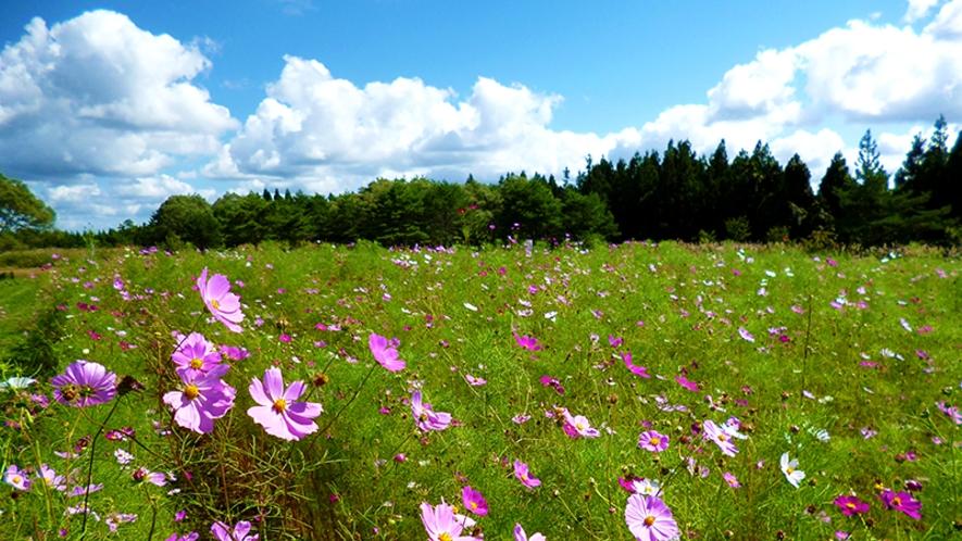 【南由利原高原】爽やかな高原の風と壮大な景色が魅力