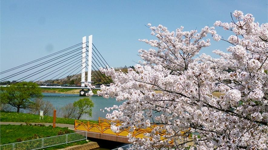 桜の季節のせせらぎパーク