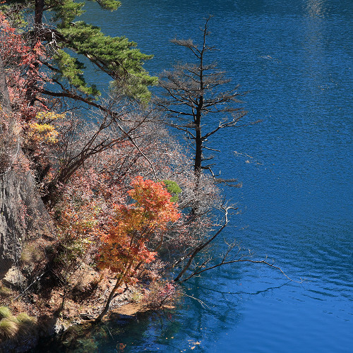 奥四万湖紅葉