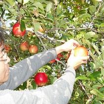 金井農園★りんご狩り