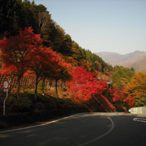坂の上の紅葉