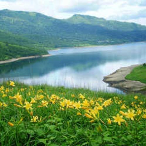 野反湖とノゾリキスゲ