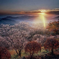 光芒 桜山公園