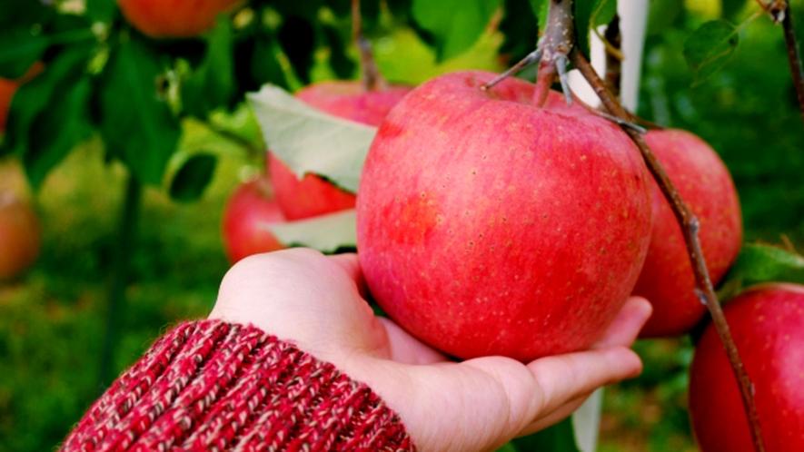 原田農園★りんご狩り