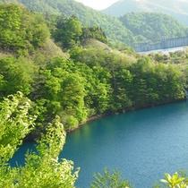【観光・散策】奥四万散歩へ出かけませんか?きらきら輝く湖面と新緑。奥四万湖は一周約4km。奥四万散歩