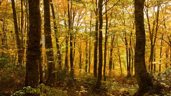 【オータムキャンペーン】1日5組限定!ぶなの森ビール付き♪ブナ林の黄葉を満喫