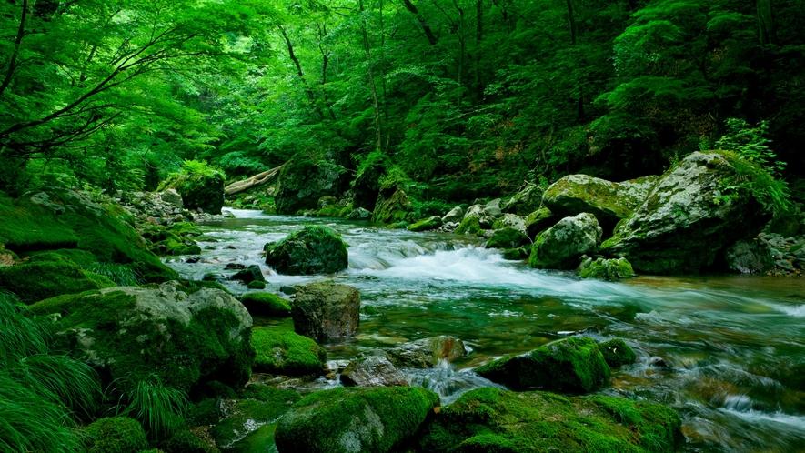 *夏の白神山地/さらさらと流れる水の音を聴きながら、神聖な空気を吸い込んで♪