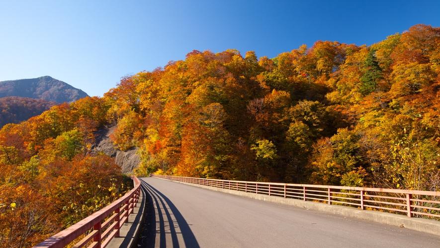 *秋の白神山地/道路沿いに広がる絶景。ドライブをしながら、美しい山の紅葉をご覧いただけます。