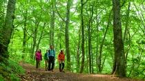 *夏の白神山地/青々と光る世界遺産の森の中を散策。静かなやさしい時間が流れます。