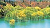 *春もみじ/新緑の時期だけの色鮮やさは圧倒的