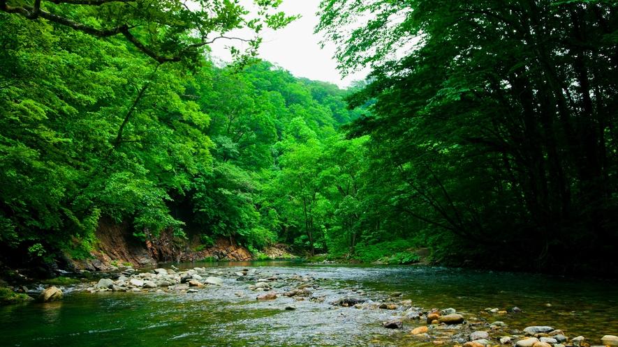 *夏の白神山地/森の中は爽やかで心地よい風が吹いています。夏の暑さを忘れてリフレッシュ!