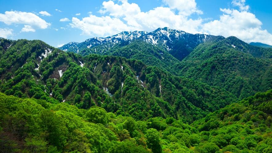 *春の白神山地/新緑が美しい、春の山並み。