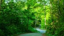 *春の白神山地/春は新緑が魅力!清々しい空気の中散策をお楽しみください。
