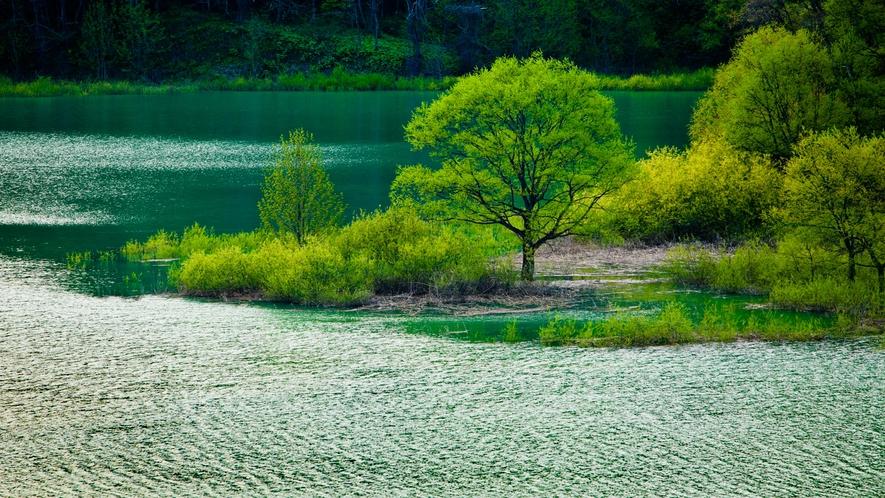 *春の白神山地/残雪と新緑のコントラストが美しい早春の景色。