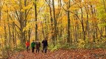 *秋の白神山地/美しく色付くブナ林の中を散策。紅葉の季節は人気の観光シーズンです♪