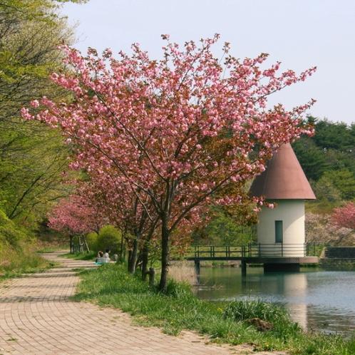 ☆鏡ヶ池のすぐ隣には「緑ヶ池」もあります
