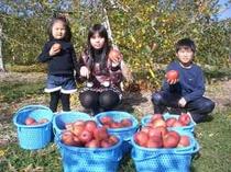 りんご狩り体験中
