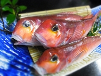 福井県産 甘鯛(グジ)