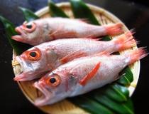 のど黒 白身魚の『トロ』とも言われる幻の高級魚