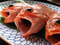 幻の高級魚ユメカサゴ