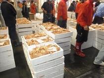 カニ魚市場