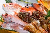 日本海の天然地魚