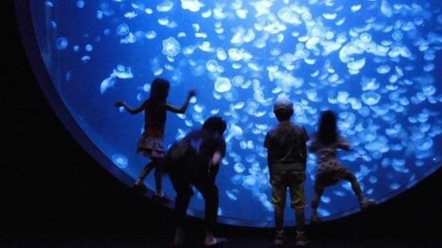 ■【加茂水族館】山形県唯一の水族館。クラゲの展示種類数で世界一を誇るクラゲ水族館です(お車6分)
