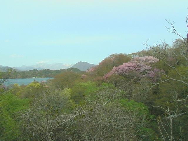 山桜と桧原湖