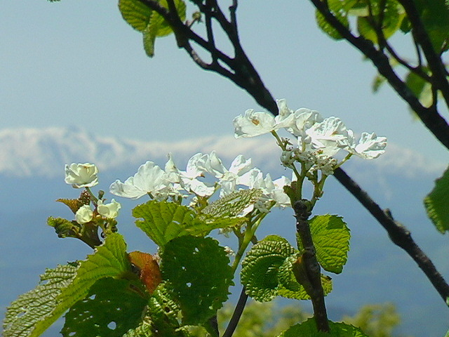 雄国山 山頂からの景色