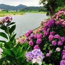 *ホテル目の前の久慈川/毎年四季折々の花が咲き誇ります。アジサイや新緑など、季節の花をお楽しみ下さい