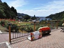東沢バラ公園にて秋のバラまつり開催♪