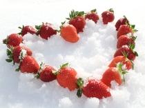 真冬でも楽しめる♪甘ーい雪中いちご