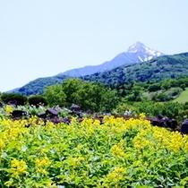 旅館近くの高山植物園は絶好のお散歩コース♪