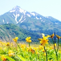 お花を観光のメインにされる場合、6月中旬〜7月中旬(その年の気温により多少前後します)がおススメ♪